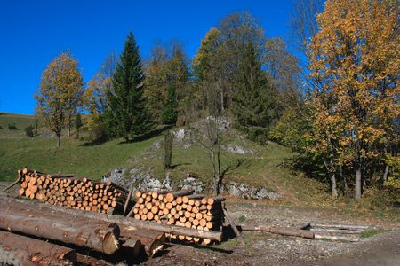 logging: Autumn logging.