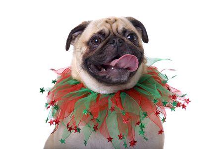 carlin: Happy Holidays