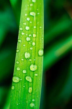 grass with water drops on it