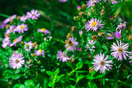 bees are pollinating some flowers