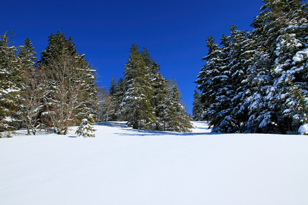 Winter on the Feldberg in the Black Forest
