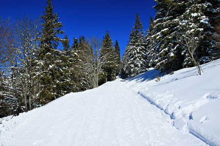highlands region: Winter on the Feldberg in the Black Forest