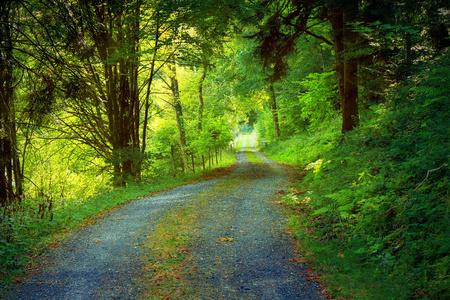 ドイツの黒い森を風景します。 写真素材