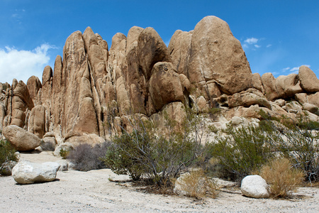 joshua: Joshua Tree National Park, Mojave Desert, California
