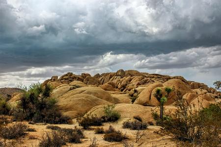 Thunderstorm in the Joshua Tree National Park, Mojave Desert, California