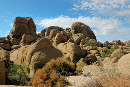 joshua: Amazing nature of the Joshua Tree National Park which is part of dry Mojave Desert in California. Lots of rocks and cacti. Perfect for hiking and climbing