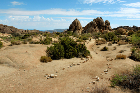 Amazing nature of the Joshua Tree National Park which is part of dry Mojave Desert in California. Lots of rocks and cacti. Perfect for hiking and climbing