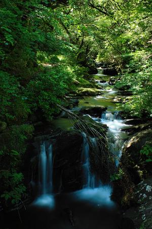 Killarney National Park in Country Kerry, Ireland