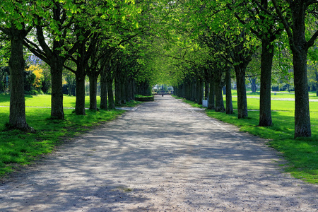 Fresh and green forest in spring, Germany Stock Photo