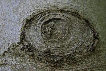 face in tree bark: Tree bark with eye design, Germany