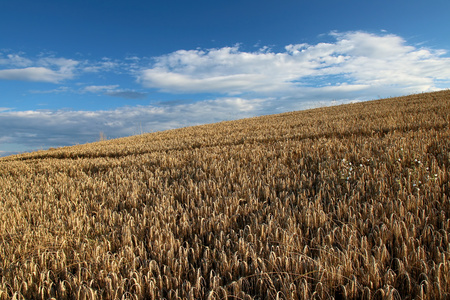 Aerial view of golden grainfield under the blue sky with clouds, Luxembourg