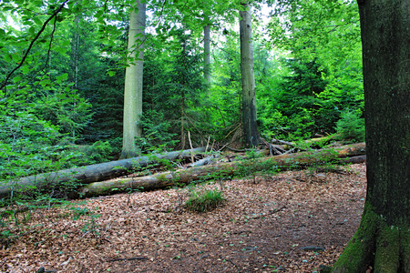 Wilderness trail, National Park Black Forest , Baden-Wuerttemberg, Germany Stock Photo