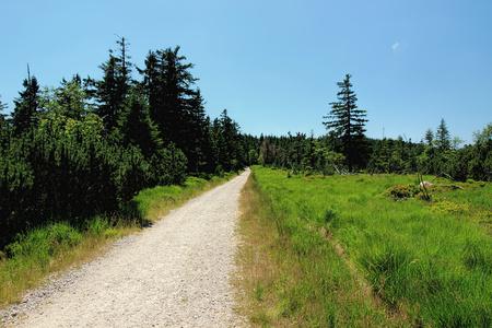 독일의 검은 숲에서 인상적인 하이킹