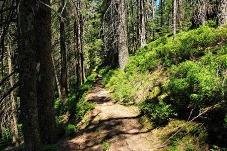 broken hill: Wilderness trail, National Park Black Forest , Baden-Wuerttemberg, Germany Stock Photo