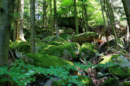 riverside trees: Black Forest hiking trail through the woods of Gertelbach in the Buehlertal, Germany Stock Photo