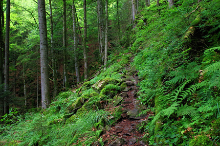 Black Forest hiking trail through the Wutachschlucht, Germany Stok Fotoğraf