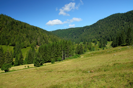 Lovely and romantic hiking path called Geissenpfad near Menzenschwand showing the amazing landscape in the southern Black Forest in Germany