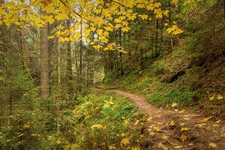 Hiking impression in the Black Forest along the Roetenbach in Autumn, Germany. Magical Autumn Forrest. Colorful Fall Leaves. Romantic Background.