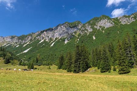 Brandnertal in Summer, Vorarlberg, Austria 写真素材