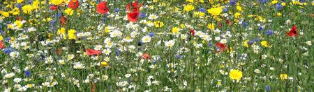 Campo de flores silvestres Foto de archivo - 36193512