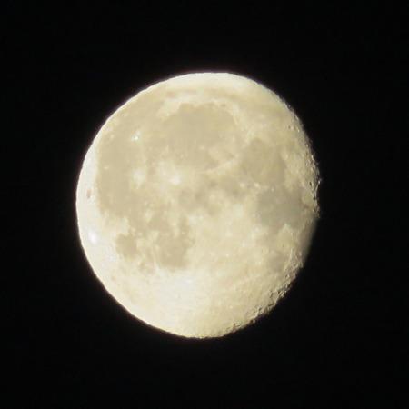 moonshine: White Morning Moonlight