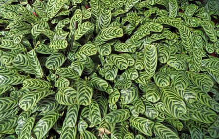 Varigated Green Leaves Stock fotó