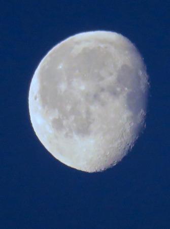 bluey: Bluey Moon