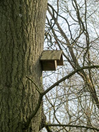 maison oiseau: Tree With Bird House