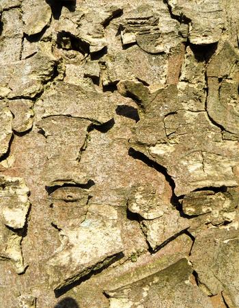 나무 줄기 나무 껍질