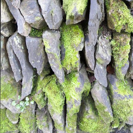 liquen: Liquen cubierto Pared de piedra seca Foto de archivo