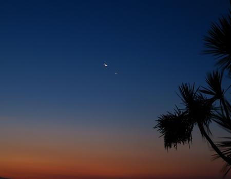 waning moon: Sunrise with Orange Dawn, Palm Trees and Moon and Venus