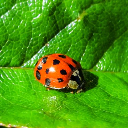 Ladybird on Green Leaf in Sunshine
