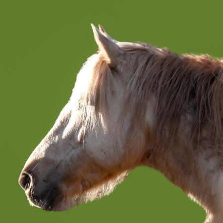 horses head: Horses Head in Sunshine