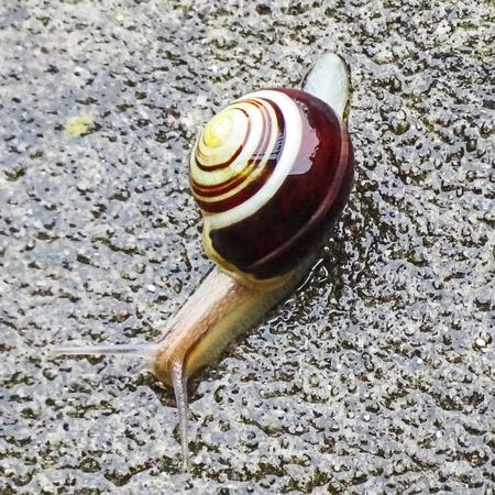 logarithmic: Cream and Brown Garden Snail Stock Photo
