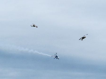 grey skies: Plymouth Airshow, Light Aerocopter With Seagulls