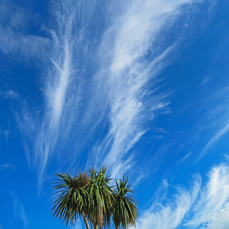 weather front: Streaky Clouds Above Palm Trees