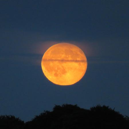 waning moon: Orange Moon Behind Cloud Above The Trees Stock Photo