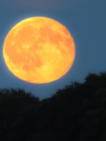 waning moon: Moon Rising At Dusk