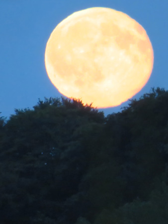 Full Moon Rising Above The Trees