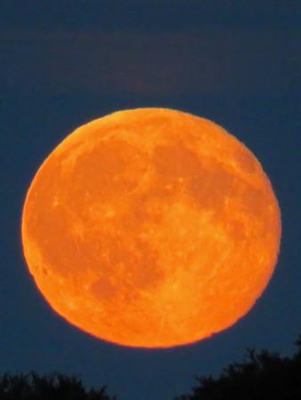 waning moon: Orange Moon Over The Trees