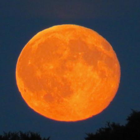 tonight: Orange Moon Over The Trees