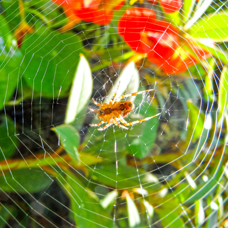 eight legs: Spider On Web Stock Photo