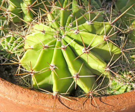 spines: Cactus With Spines Stock Photo