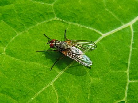 Garden Fly On Green Nasturtian Leaf Zdjęcie Seryjne - 82370108