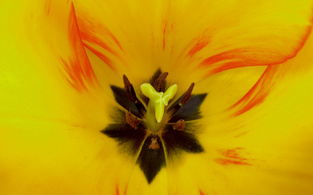 Yellow Tulip Centre