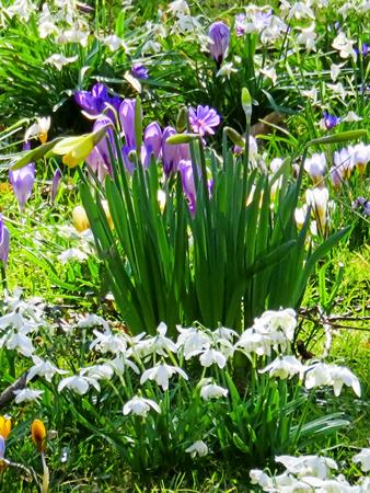 Spring Flower Garden Display