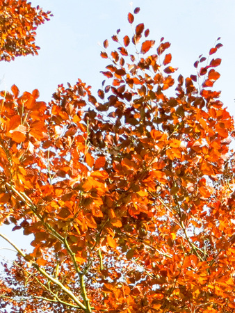 Autumn Golden Leaves On Tree Stock Photo