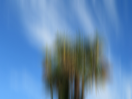 Abstract Tree Sky