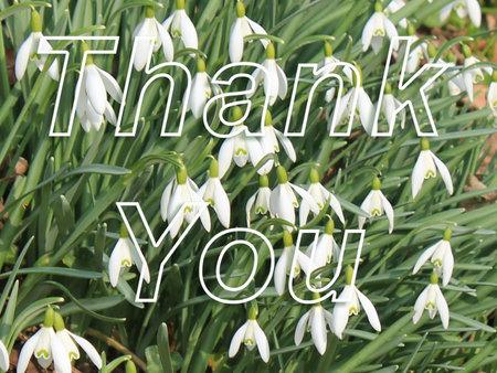 Snowdrop Thank You Card Front Reklamní fotografie