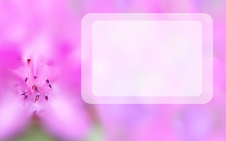 Mock up concept with pink azalea and transparent rectangular text space. Blurred background with macro flower. Spring, summer template. Elegant, delicate, attractive, romantic image